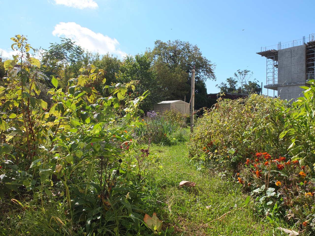 Garden behind Lillian H. Smith Branch