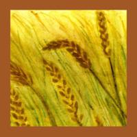 Aud_icon_grasslands.jpg