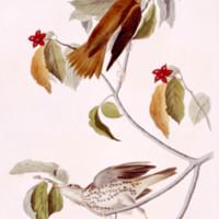 AUD-Plate-073.jpg