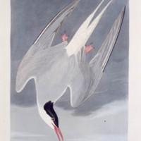 AUD-Plate-250.jpg