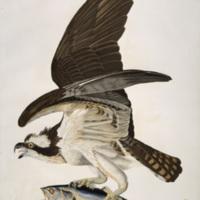 audubon-Pl-81.jpg