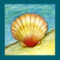 Habitat: Ocean & shoreline