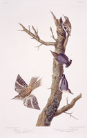 1. Brown Creeper, 2. Californian Nuthatch